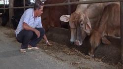 Đồng Nai: Tăng cường phòng chống bệnh lở mồm long móng trên đàn trâu bò