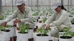 Bắc Ninh phát triển nông nghiệp: Đột phá nhờ ứng dụng công nghệ cao vào sản xuất