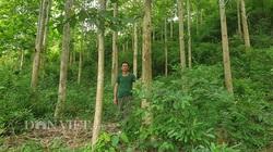 Nậm Pồ tăng cường các giải pháp quản lý, bảo vệ rừng