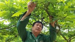 Lạng Sơn: Trồng cây này, nuôi con này tham gia vào OCOP, nông dân xứ Lạng cứ thế mà khấm khá