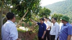 Vượt dịch Covid-19, Việt Nam mở cửa xuất khẩu nhiều cây trái