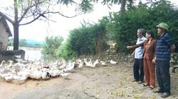 Nông dân ở xã An Khang trồng loại rau gì, nuôi con gì mà cứ sản xuất đến đâu, thương lái mua hết đến đó