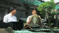 Kiên Giang: Một ông nông dân nuôi cả trăm con cua đinh hình thù kỳ dị, nhiều con to nặng 10 ký, bán đắt tiền