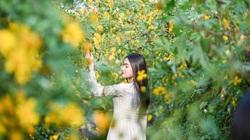 Thích thú check-in với hoa dã quỳ đẹp ngất ngây ngay giữa lòng Hà Nội