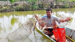 Cà Mau: Thả cá đối mục trong ao nuôi tôm sú, bất ngờ bắt được hơn 1,5 tấn, nông dân mừng vì bán đắt hàng