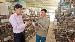 """Bắc Giang: Vốn ưu đãi """"chắp cánh"""" nghề nuôi chim bồ câu, anh nông dân này giàu lên"""
