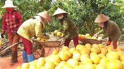 Một doanh nghiệp nông nghiệp hữu cơ tỉnh Bắc Giang vừa xuất khẩu thành công 36.000 quả bưởi đào đường sang nước nào?