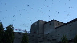 """Gia Lai: Xây nhà lầu nuôi """"chim tiền tỷ""""-nghề siêu lợi nhuận và là """"mỏ vàng"""" ở thị xã Ayun Pa"""