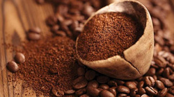 Giá cà phê tiếp tục giảm, nông dân không mặn mà tái canh