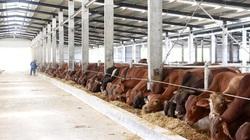 Quảng Ninh đẩy mạnh thu hút đầu tư trong chăn nuôi