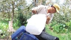 Tiền Giang: Giá nước ngọt 300 ngàn/khối, phải mua cứu sầu riêng