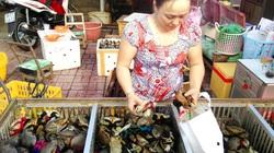 Lại đến mít Thái, cua biển rớt giá, ế thảm vì virus corona