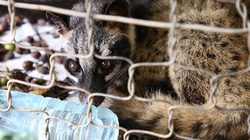 Kiểm soát động vật hoang dã phòng dịch virus corona