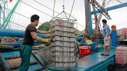 Trúng mẻ mực cực lớn, ngư dân Nghệ An dùng chiêu này giữ mực tươi, bán giá cao