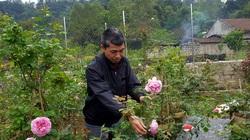 """Đi lạc vào khu vườn hơn 2.000 gốc của ông """"vua"""" hoa hồng xứ Lạng"""