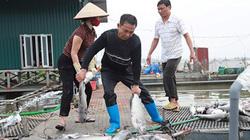 """Vụ 120 tấn cá chết ở Hải Dương: Hơn 10 tỷ trôi theo dòng nước """"lạ"""""""