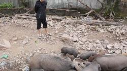 Clip: Có nên nuôi lợn rừng ở quận Đống Đa như chàng trai Hà Nội này?
