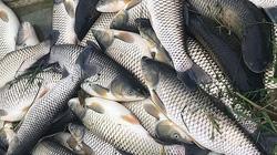 Hàng chục tấn cá lồng chết bất thường