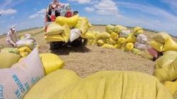 Bộ Công Thương hé lộ lý do đưa ra đề xuất tạm dừng xuất khẩu gạo