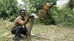 Hé lộ vùng đất của những con rắn hổ mang chúa siêu to khổng lồ