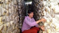 Thoát nghèo nhờ học trồng nấm qua mạng