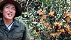 """Cây tiêu """"ngắc ngoải"""", mạnh dạn bỏ, trồng cây ăn quả nhiều tiền hơn"""