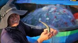 Ngư dân Phan Thiết được mùa cá mòi