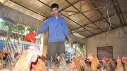 DN bất ngờ tăng giá thức ăn: Dân kiệt sức, Cục Chăn nuôi nói không đáng kể