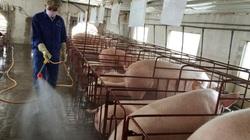 Giá heo hơi hôm nay 7/3: Chính phủ yêu cầu 3 Bộ kiểm soát giá lợn