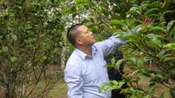 """""""Lão khùng"""" mang thứ hoa vàng trên núi về trồng bán 15 triệu/kg"""