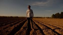 Đổ sữa, đập trứng, cày nát rau: Bi kịch của nông dân Mỹ mùa đại dịch