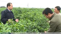 Kỹ sư điện đam mê nông nghiệp, thu tiền tỷ nhờ sản xuất phân bón hữu cơ
