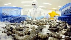 Xuất khẩu tôm tăng mạnh sau khi kiểm soát dịch Covid – 19