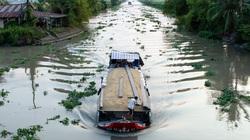 Hải quan xin thông quan 146.000 tấn gạo xuất khẩu 'hụt'