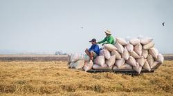 Điều hành xuất khẩu gạo giật cục làm khó doanh nghiệp