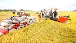 Giá gạo xuất khẩu của Việt Nam tăng lên hơn 500 USD/tấn