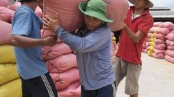 """2 """"ông lớn"""" ngành lúa gạo lên tiếng về việc tạm dừng xuất khẩu gạo"""