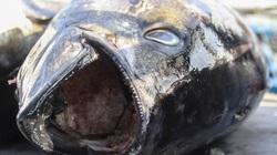 Bình Định: Vi phạm quy định, 1 chủ tàu đánh bắt xa bờ bị phạt 900 triệu