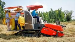Doanh nghiệp xuất khẩu gạo bỗng dưng mất tờ khai hải quan