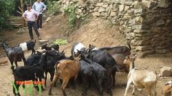 Điện Biên: Giúp hội viên giảm nghèo thông qua các chi, tổ hội nghề nghiệp