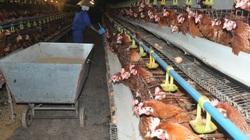 Chuyên gia chỉ ra sai lầm khiến người chăn nuôi thường gặp thất bại