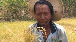 Ninh Thuận: Nắng như rang, dân khổ sở tìm nước uống cho dê, bò