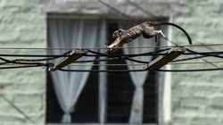 Khỉ xuống phố những ngày Covid-19 lọt top ảnh đẹp về động vật tuần qua