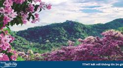 """An Giang: Vùng Bảy Núi mưa rồi, tha hồ ăn đặc sản bọ rầy, ve sầu, """"sống ảo"""" với hoa rừng"""
