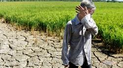 Trung Quốc bị nghi giữ nước gây hạn, dự báo năng suất lúa gạo Việt Nam giảm hơn 3%