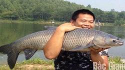 """Bắc Giang: Vác con cá trắm đen """"siêu to khổng lồ"""", dân câu gọi là """"vua cá"""""""