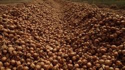 Mỹ chi 3 tỷ USD mua nông sản giúp nông dân
