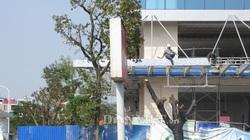 Hải Phòng: Đề xuất xã hội hóa kinh phí trồng cây mới thay thế cây bị chặt hạ trái phép