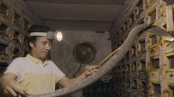 Hiểm nguy nghề nuôi rắn tại làng rắn lâu đời nhất Việt Nam