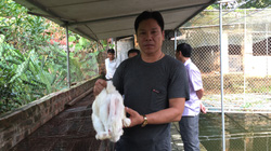Bắc Ninh: Nuôi con đặc sản, nhẹ công mà lãi cao